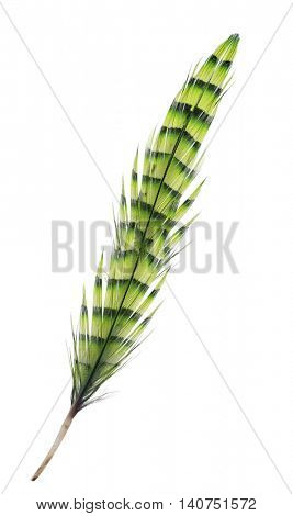 variegated yellow feather isolated on white background