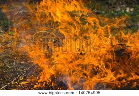 Campfire in a  wild forest closeup .