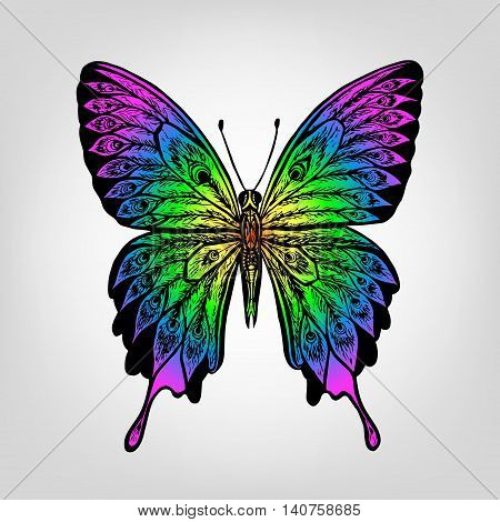 Vector rainbow butterfly. Exotic tropical butterfly. Hand drawing illustration