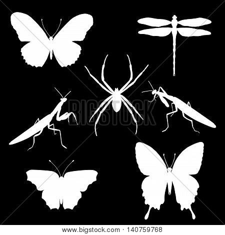 Vector set of silhouettes of insects - butterflies spider mantises dragonfly. Insect silhouette