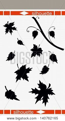 Beautiful illustration of leaves silhouette. Birch and maple leaves. Vector illustration.