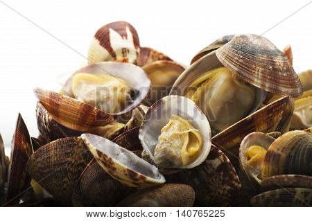 Fresh Clam cooked close up on white
