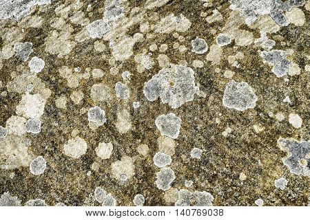 Texture background of natural patterns and shapes of lichen on old stone brick
