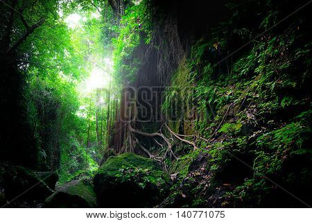 Fantasy Mystical Mossy Forest Nature. Indonesia