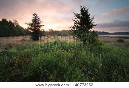 forest meadow at sunrise in summer Netherlands