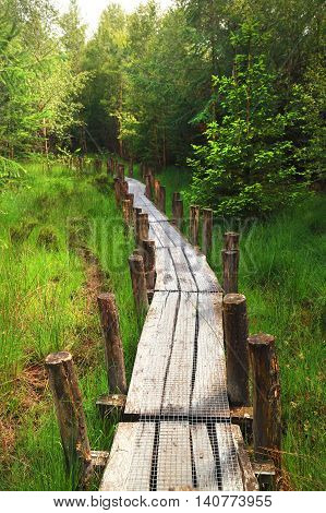 long wooden path into green summer forest
