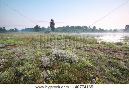 wild lake in calm misty summer morning