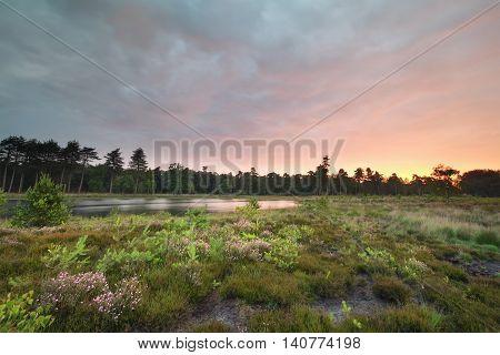 beautiful rainy summer sunrise on wild lake