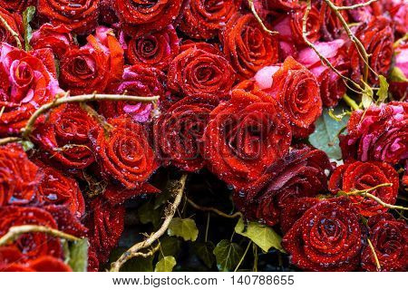 Floral arrangement with colorful rose flowers and wooden twigs with water drops closeup