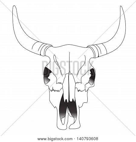 Bull skull, cow skull, animal skull, cattle skull, bison skull, desert skull, tattoo skull, halloween skull. Vector.