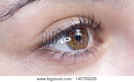 picture of a macro of a woman eye with reflections of a macro flash