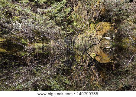 The mirror like pond in Mendenhall Glacier Park (Juneau Alaska).