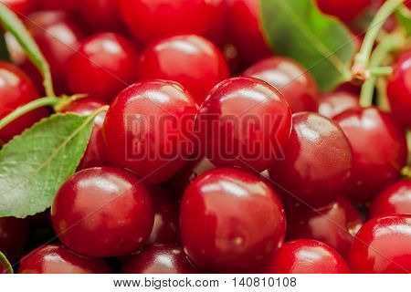 Appetizing, juicy, bright cherries closeup. Pulp cherry berries - tasty and healthy natural medicine with a broad spectrum of action