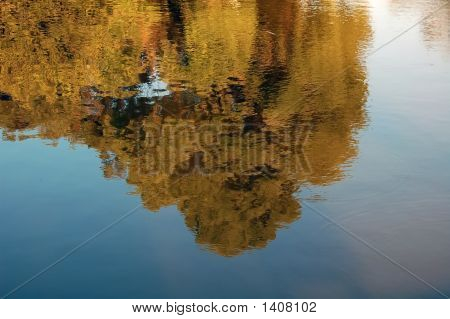 The Tree In Water