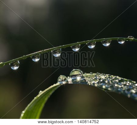 Fresh grass with dew drops and Sun beams closeup