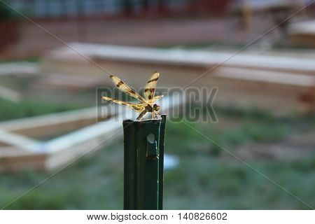 Dragonfly has landed on a metal pole and looks around its surroundings