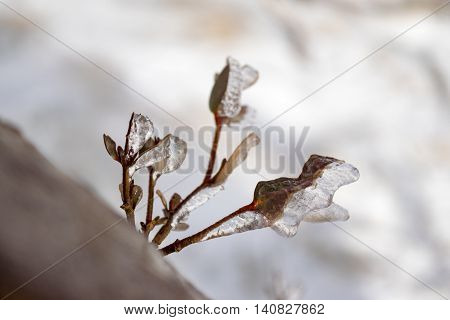 Close up of ice formations on twigs created from strong wind during heavy snow