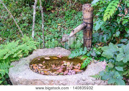 Japanese cho-zu in nature garden background in Japan