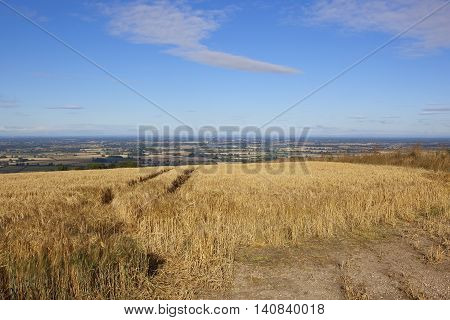 Vale Of York With Barley
