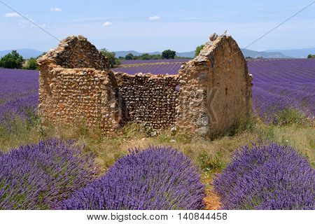 Ruins in the lavender field at plateau Valensole, Provence, France