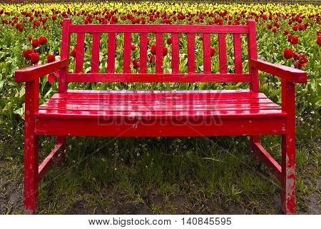 Red bench situated in a colorful field of tulip flowers.