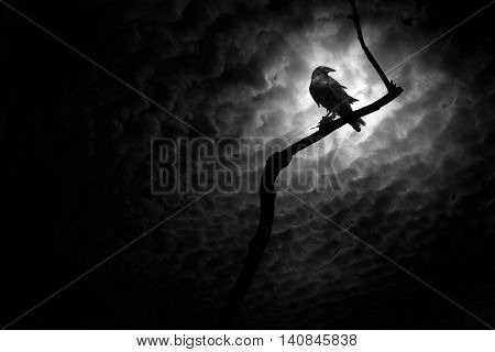 A raven on a barren branch in Death Valley California