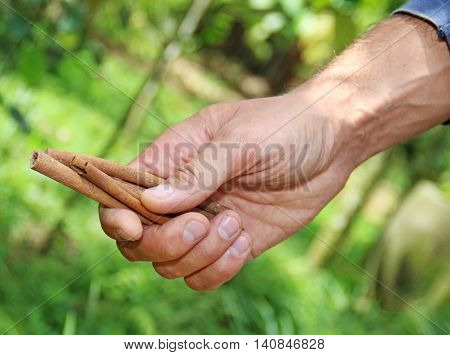 a man holding cinnamon in a hand