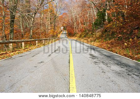 Autumn scene with road in forest