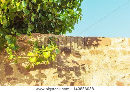 Part of an old stone wall and a tree branch on blue sky background