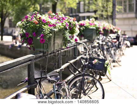 Selective focus of flowers in a flower pot. Amsterdam city with bicycles locked on a bridge at the canal.