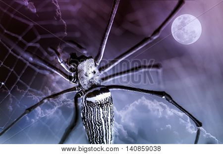 Closeup spider on spiderweb and beautiful nightly sky with full moon. The moon taken with my own camera no NASA images used. Outdoors. Macro.