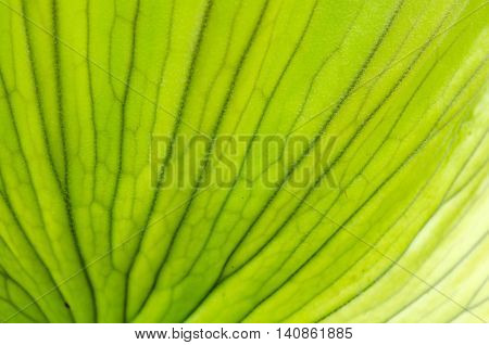 Pattern of green leaf for background texture