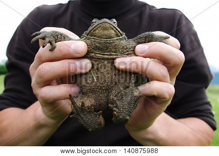 Man holding a frog in his hands during the day