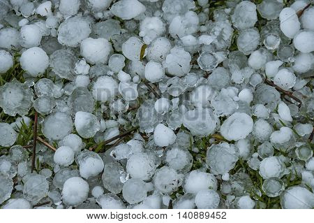 Big quantity of ice ball over the grass in garden, South Africa