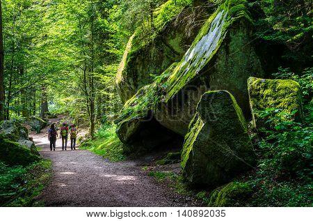 Summer forest Schwarzwald in Triberg, Baden Wurtemberg Germany