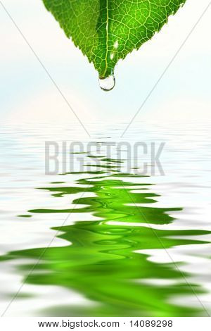Green leaf with water droplet over water reflection