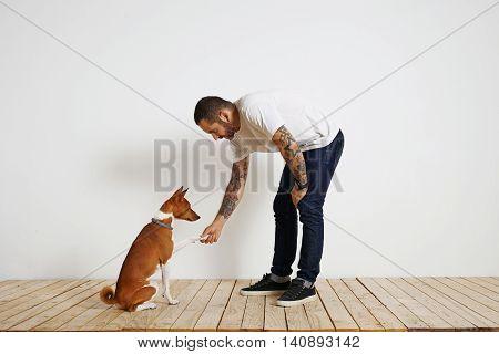 Dog Training Process At Home