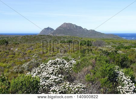 Cape Point, Peninsula, Cape Town South Africa