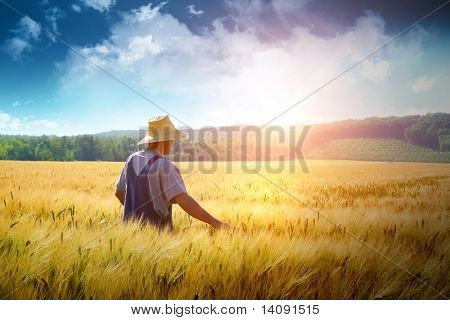 Farmer walking through a golden wheat field