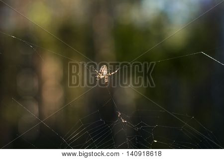 Spider Who Waits