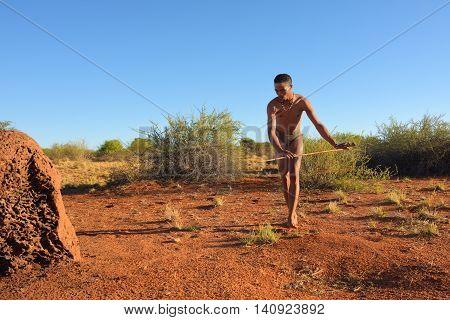 KALAHARI NAMIBIA - JAN 24 2016: Bushman hunter hunting in Kalahari desert. The San people also known as Bushmen are members of various indigenous hunter-gatherer peoples of Southern Africa