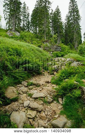 Rocky forest road leading the highest mountain of Sumava