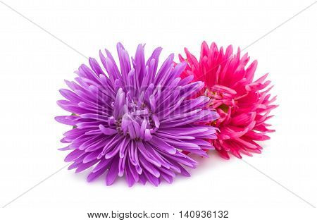 beautiful chinensis aster on a white background