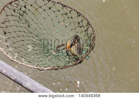 Fishing crabs in South East Asia, Vietnam