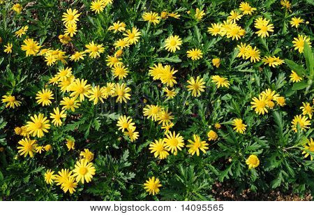 yellow flowers (Forest of Flowers)