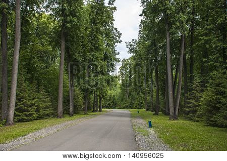The Highway In The Wood