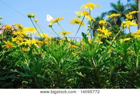 orange flowers (Forest of Flowers)