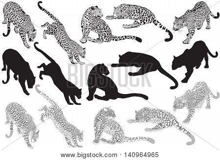 Set of leopard on a white background vector Illustration