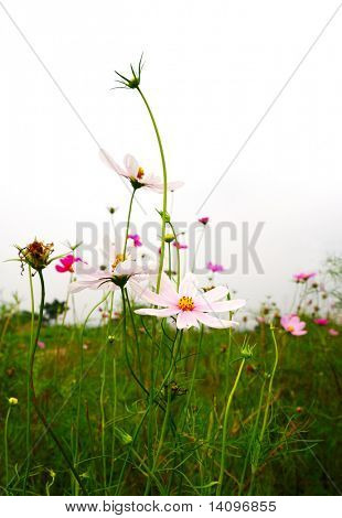 flowers (Forest of Flowers)