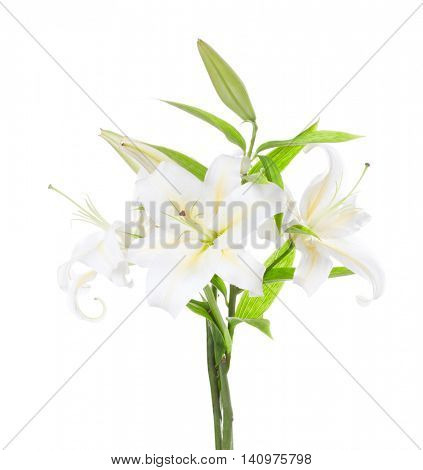 Three white lily isolated on white background